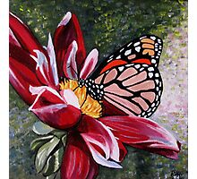 Butterfly on a Pink Flower Photographic Print