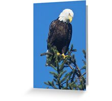 American Bald Eagle Topper Greeting Card