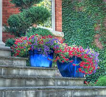 Pots of Flowers by KatMagic Photography
