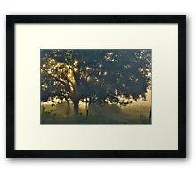 Cypress Fog Framed Print