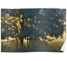 Cypress Fog Poster