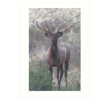 bull elk challenge Art Print