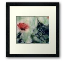 Kitty in the poppies Framed Print