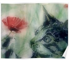 Kitty in the poppies Poster