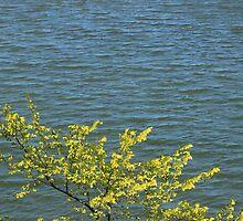 Tree Next to a Lake by rhamm