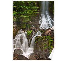 Detail of Cougar Falls - Mt. Rainier N. P. Poster