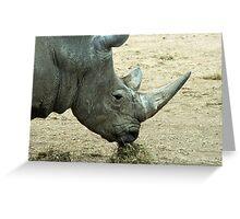 Rhino or rhinocerous  Greeting Card