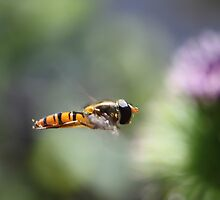 hover fly 2  by yampy