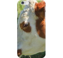 Brown and White Cow on the Prairies iPhone Case/Skin