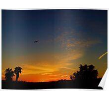 Bird In Flight At Sunset Poster