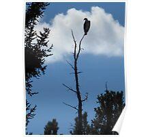 osprey silhoutte Poster