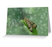 Scorpion fly Greeting Card