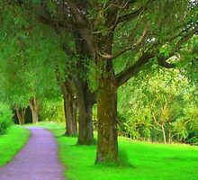 A row of tree's by shelleybabe2