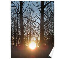 sunset through tree limbs Poster