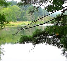 View through the trees by Tammy Devoll