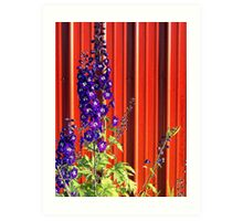 A Clash of Beauty (Lupines) Art Print