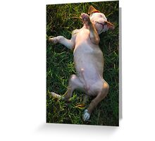 Such a Hard Life! Greeting Card