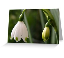 'A LAMP SHADE!' by Nature, Snowdrop time. Greeting Card