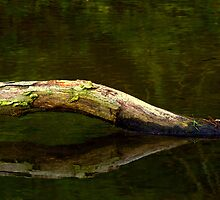 The Log Ness Monster! by Chuck Chisler