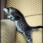 Little Pot-bellied Kitty by AngieBanta