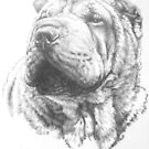 Chinese Shar Pei by BarbBarcikKeith