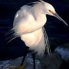 Snowy egret or heron by loiteke
