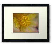 Begonia core Framed Print