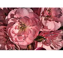 In the Pink with Roses Photographic Print
