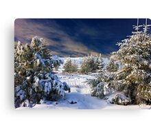winter paradise Canvas Print