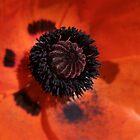 Orangeblur by Amy Hochman