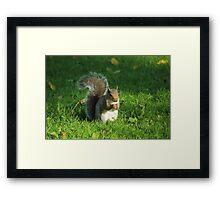 Grey Squirrel, Bute Park, Cardiff Framed Print