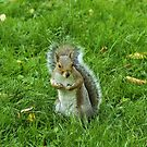 Startled Grey Squirrel, Bute Park, Cardiff by Artberry