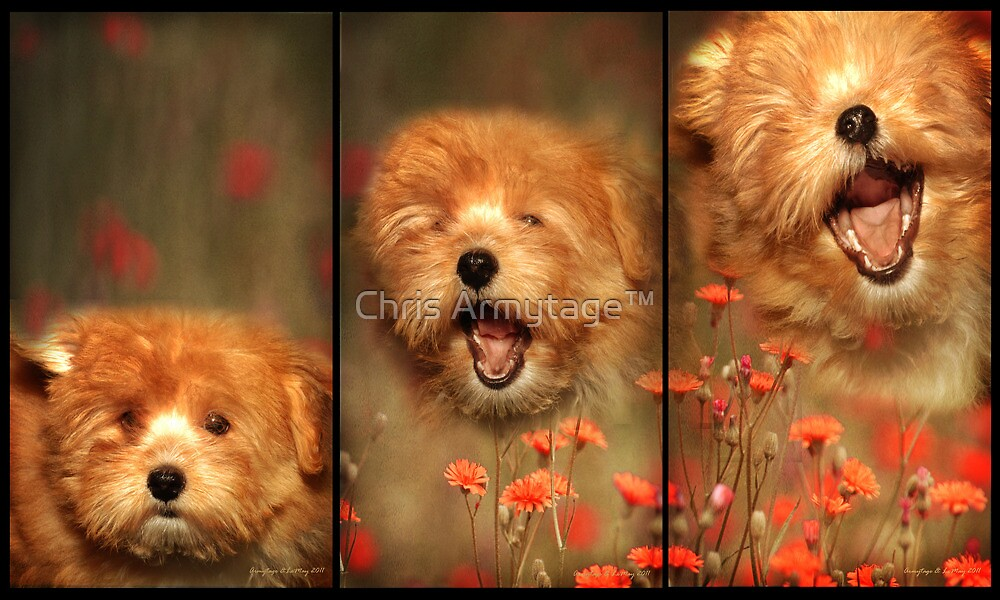 Gizmo sings! by Chris Armytage™
