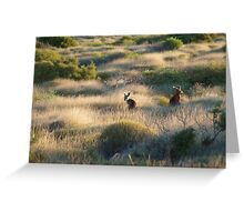 Shark Bay Roos Western Australia  Greeting Card