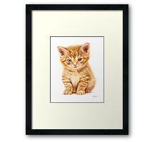 My little kitten Framed Print