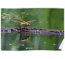 Brown Hawker Poster