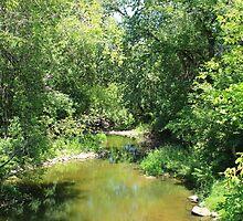 Creek in a Forest by rhamm