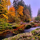 Fall on the Calapooya River by Charles &amp; Patricia   Harkins ~ Picture Oregon