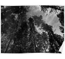 Tall Trees. Poster