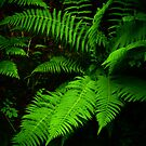Deep Green Bracken by Mbland