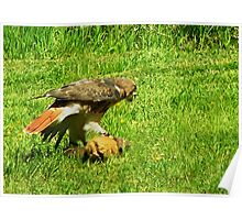 Bird of Prey with its Catch Poster