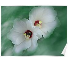 Silky Mallow Poster