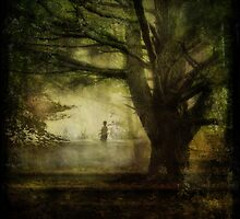 Wandering Through the Woods by Susan  Kimball