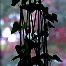 his ivy ……… by dabadac