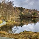 Tarn Hows in February by Jamie  Green