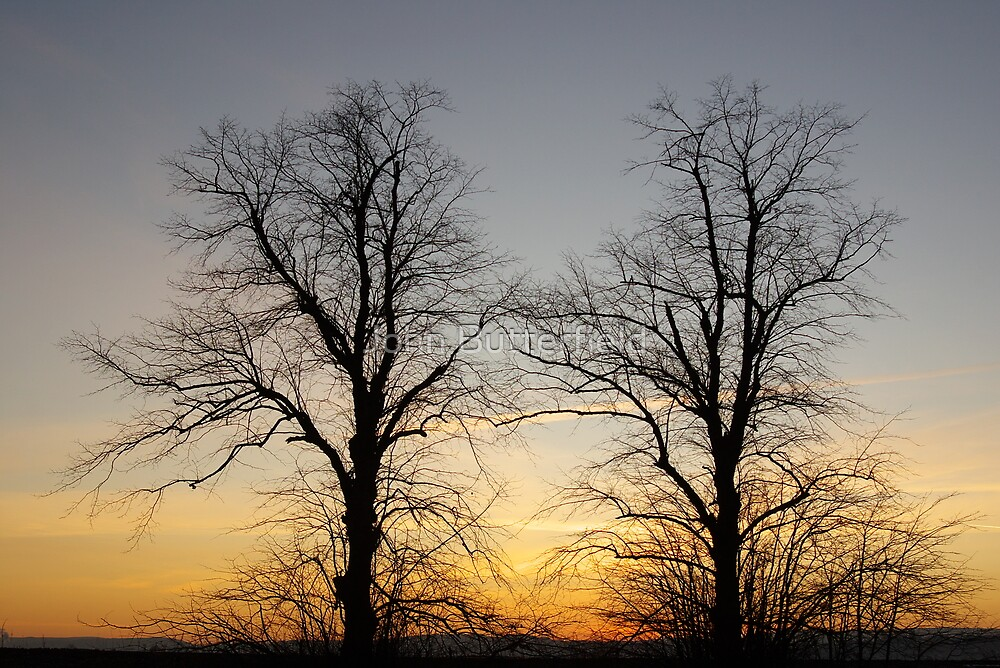 December sky at dusk - two trees by John Butterfield
