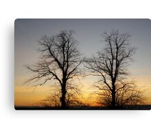 December sky at dusk - two trees Canvas Print