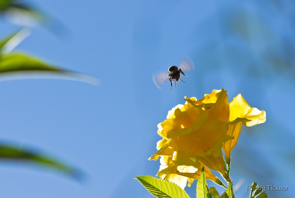 Bee flying to flower by Robby Ticknor