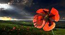 In The Field by Igor Zenin