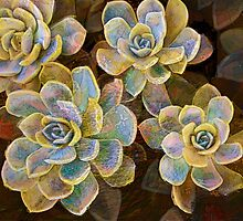 Succulent Rose by Alma Lee